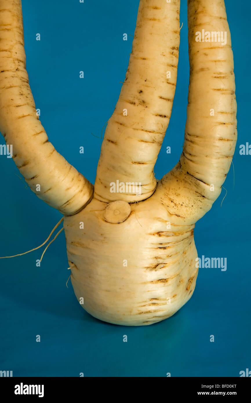 Un jardin commun, un panais légumes racines et tubercules Photo Stock