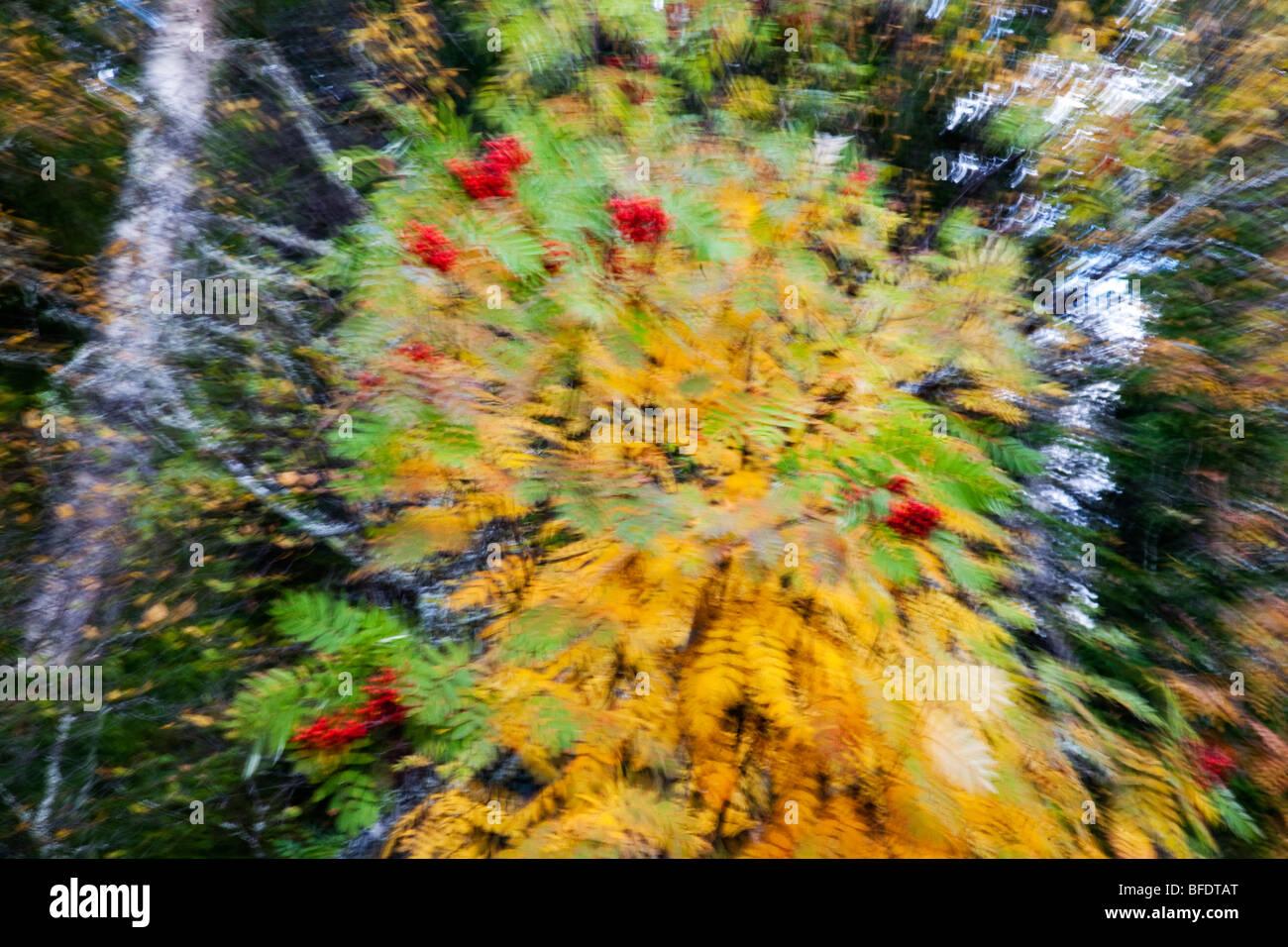 L'atmosphère de l'humeur couleurs saisons exposition zoom Suède Photo Stock