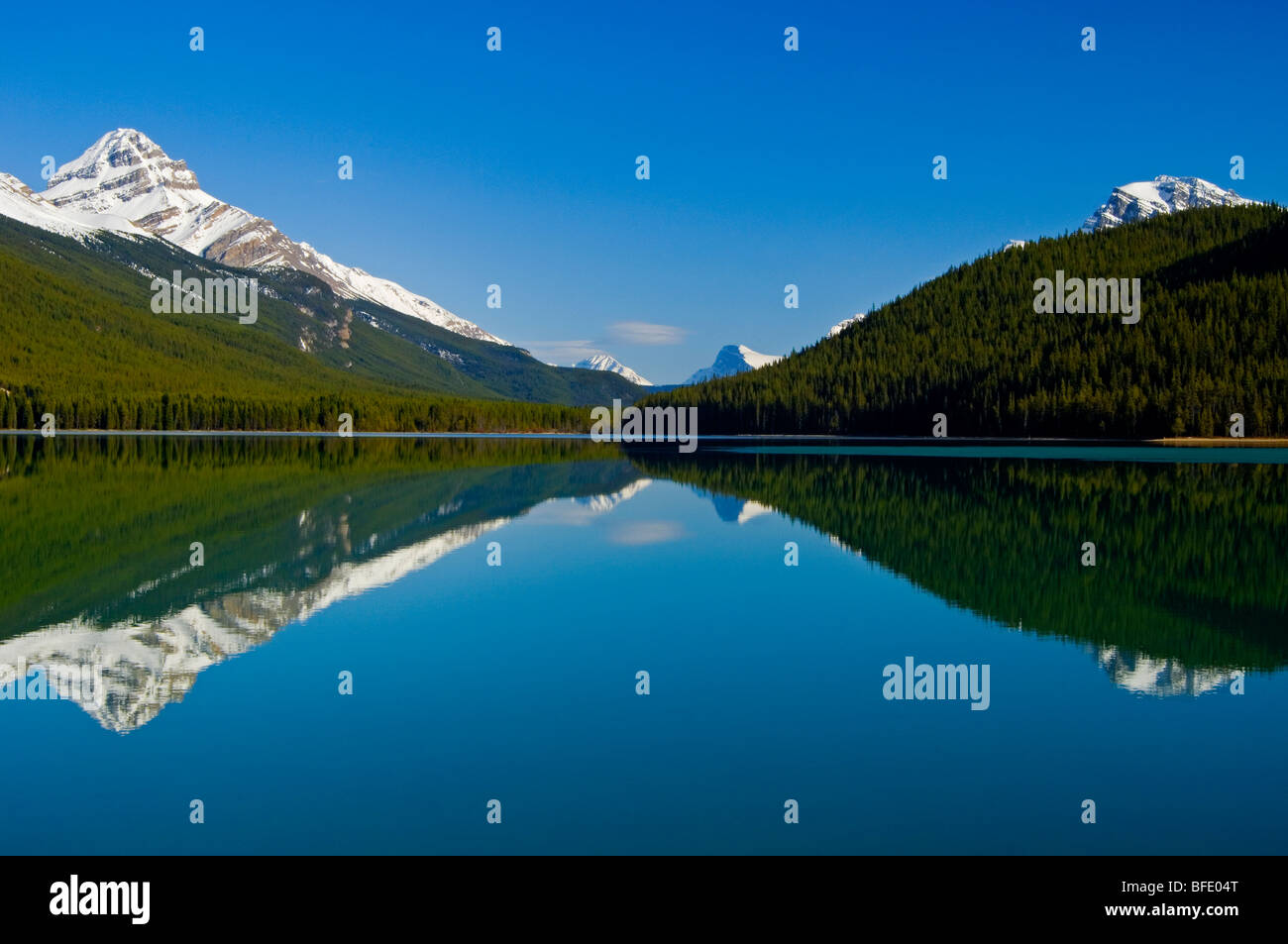 Monter à gauche, mauvaises herbes, qui se reflète dans le lac de la sauvagine inférieur, promenade Photo Stock