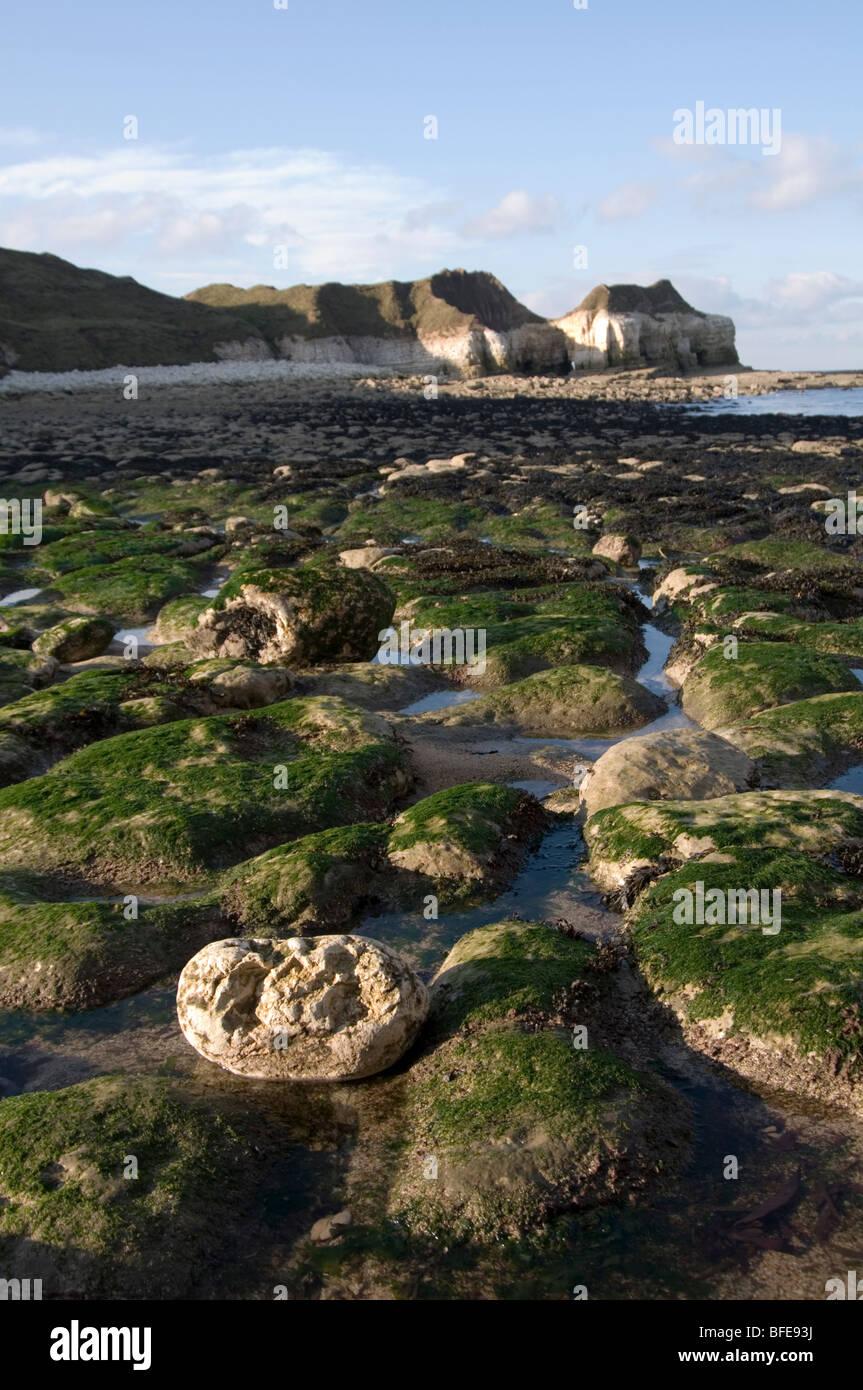 Piscines piscine rock rockpool rockpools pierre plage plages pierreuses des algues algue géologie caractéristique Photo Stock