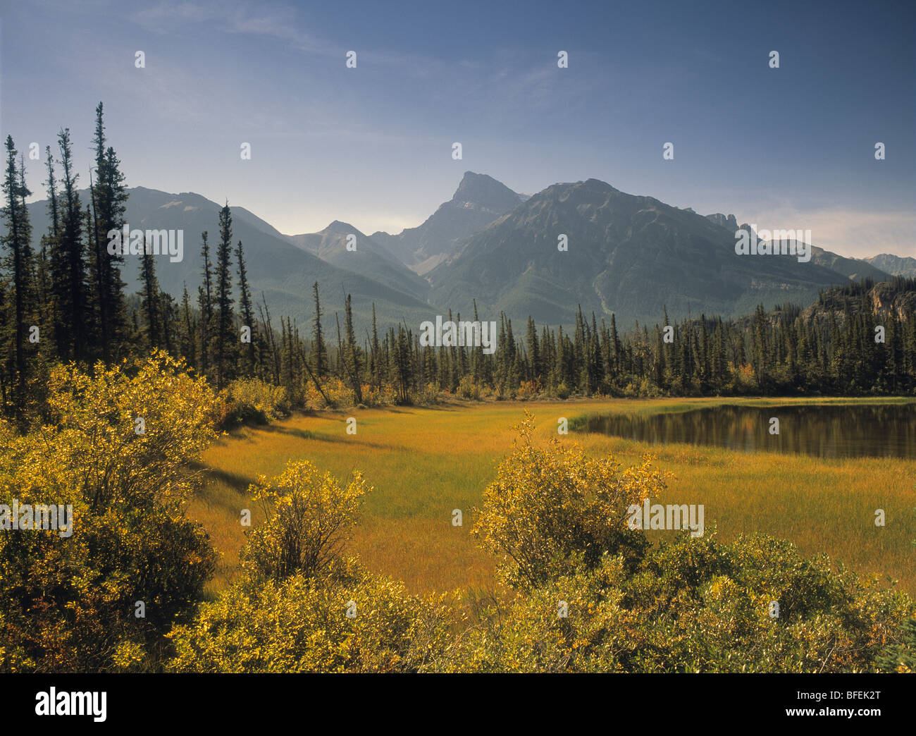 Mont Peskett chez Whirlpool Point, plaines de Kootenay, Bighorn Wildlands, Alberta, Canada Photo Stock