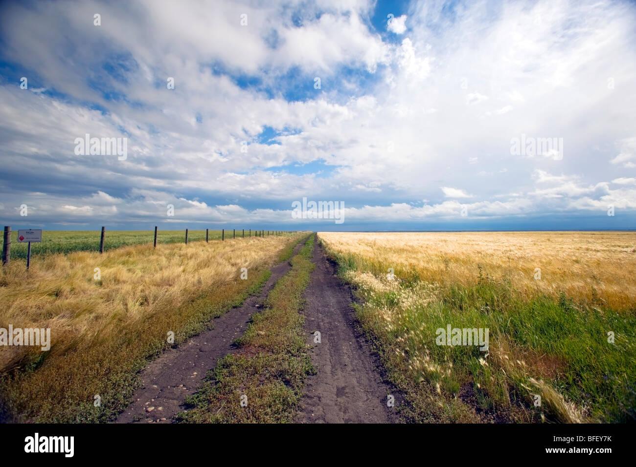 Storm breaking up plus de Ridge Road 221, l'Alberta, au Canada, les céréales, l'agriculture, la Photo Stock
