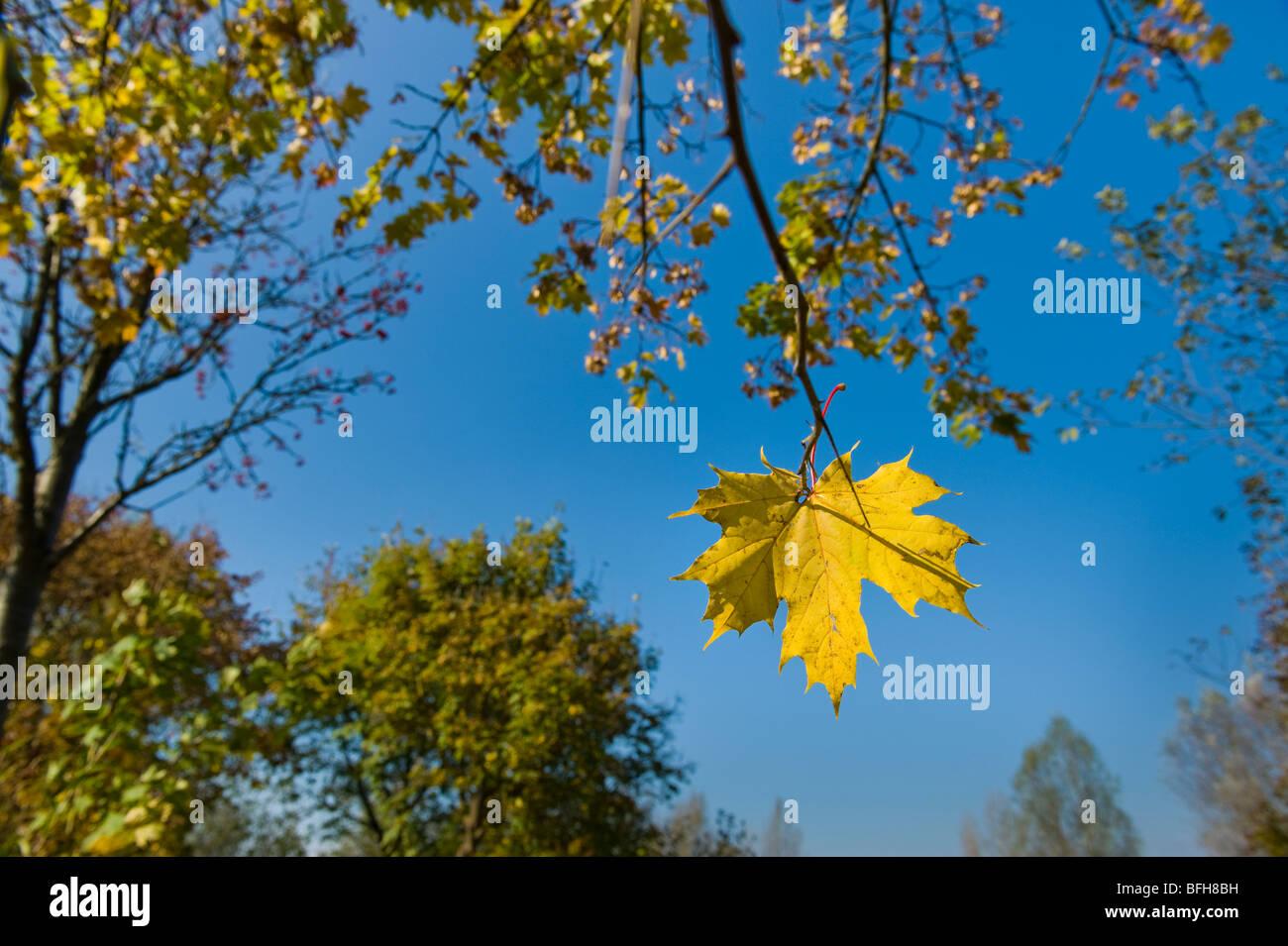 Ambiance d'automne idylle stilllife encore dernière feuille feuilles d'automne la récolte d'automne Photo Stock
