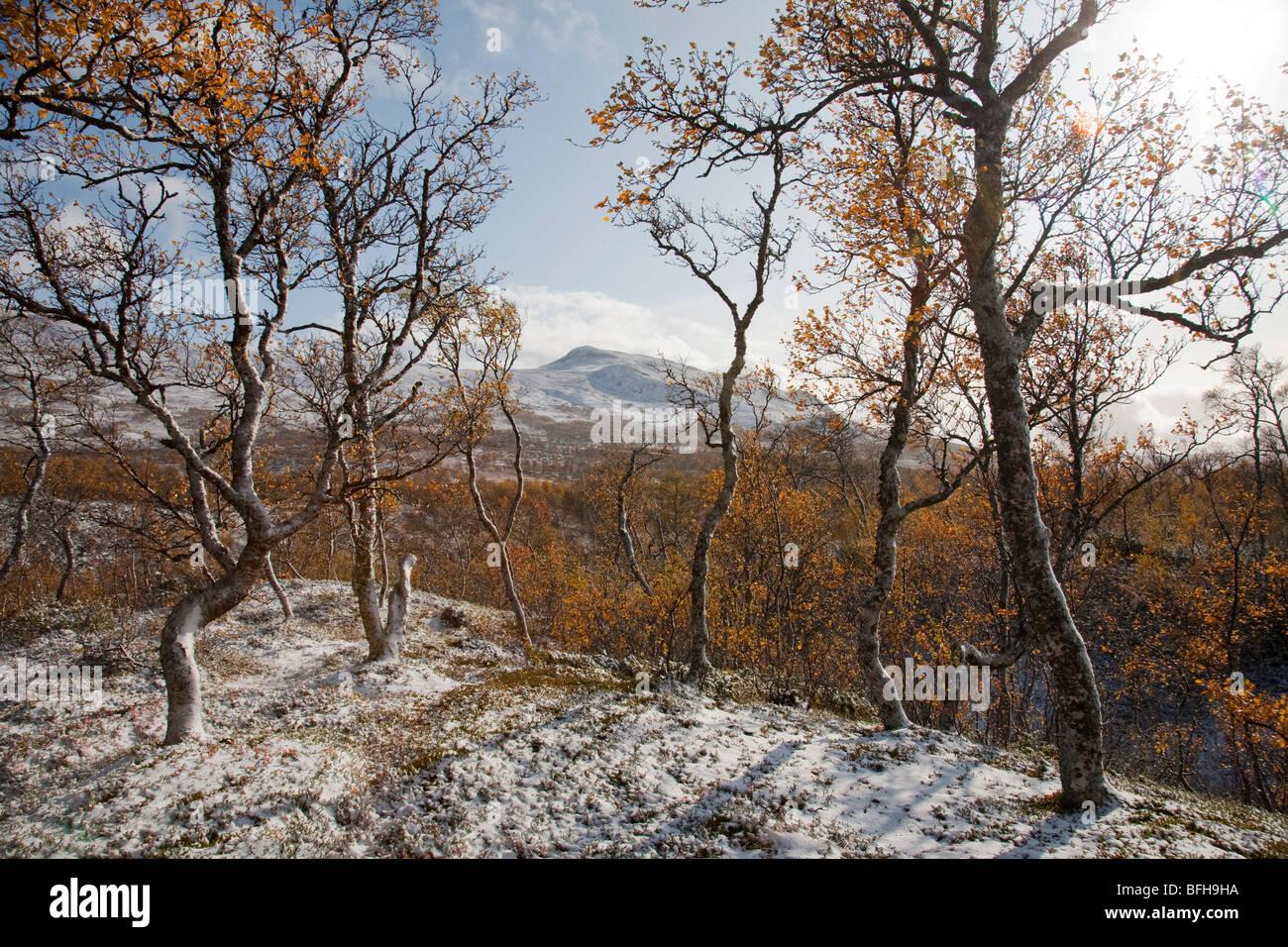 La Suède Jämtland Storulvån fjell saisons automne automne hiver neige première neige Flocons Photo Stock
