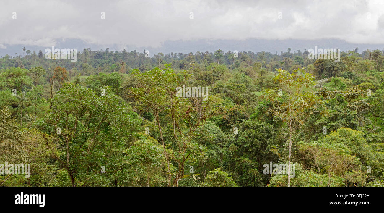 Forêt amazonienne Photo Stock