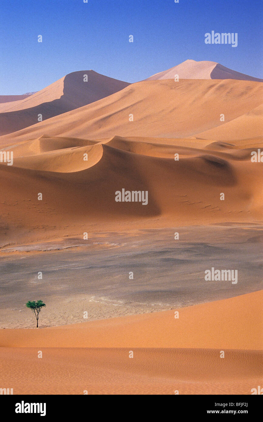 Dunes de sable dans le Parc National de Namib-Naukluft, Namibie, Afrique Photo Stock