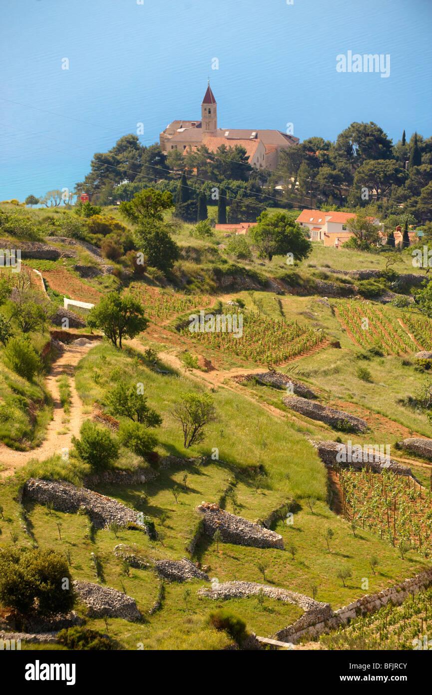 Avis de Bol et ses vignes, l'île de Brač, Croatie Photo Stock