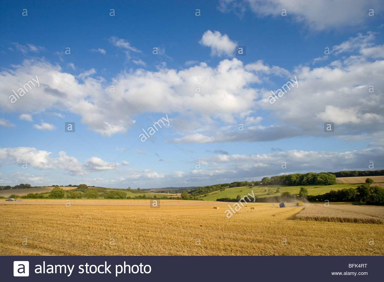 Nuages dans le ciel bleu ensoleillé au champ de blé à récolter Photo Stock