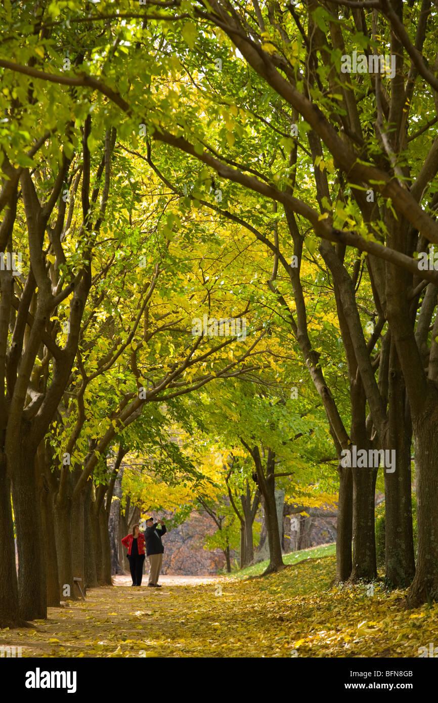 Mulberry rangée commence rond-point à Monticello accueil de Thomas Jefferson, Charlottesville, Virginia Photo Stock