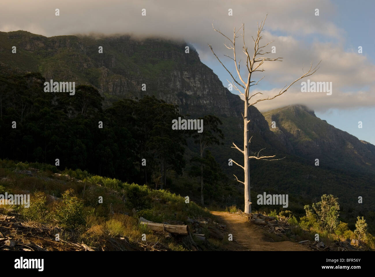 Contour au-dessus des jardins de Kirstenbosch avec arbre mort Photo Stock