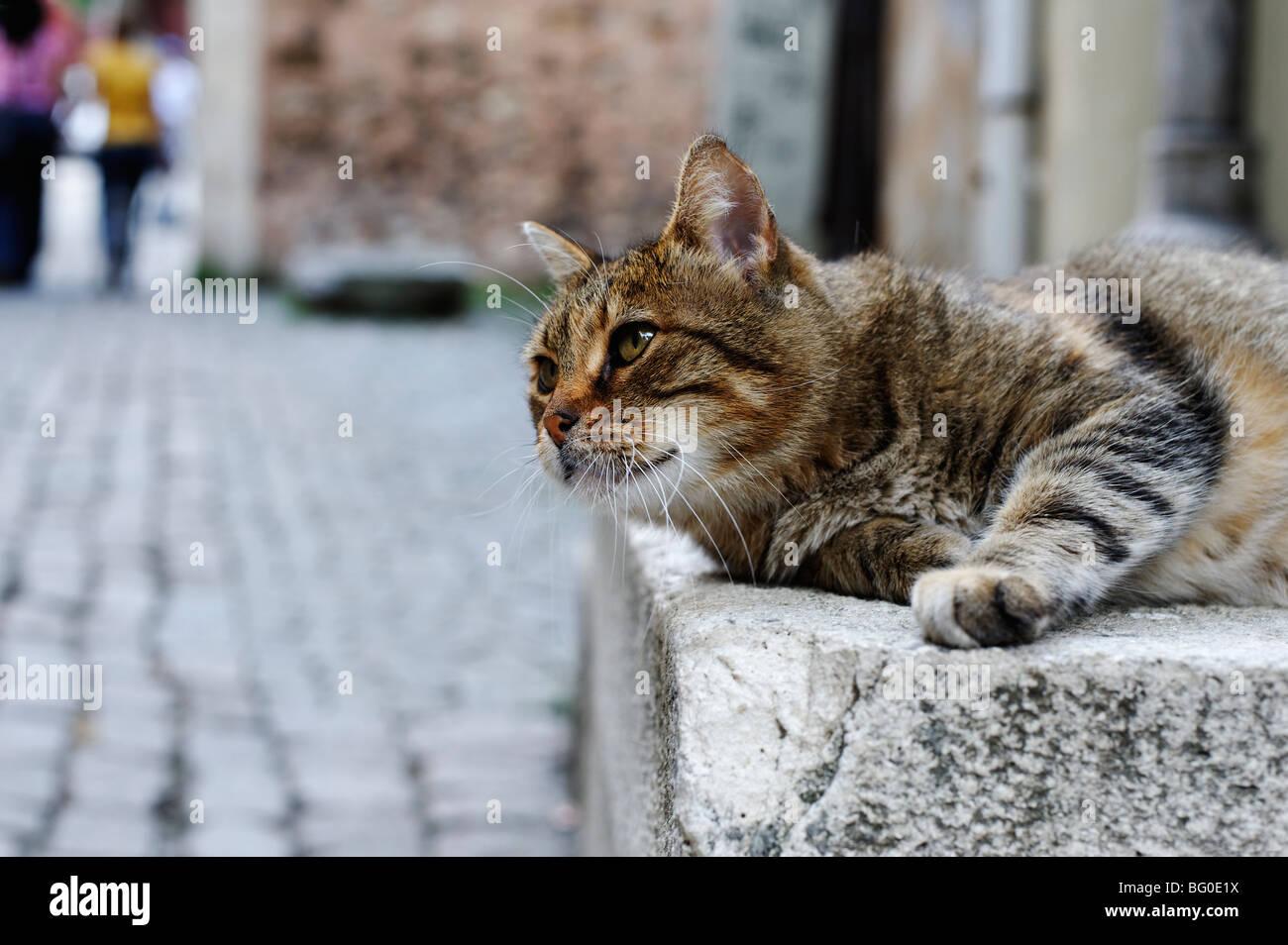 Chat de gouttière paresseux Photo Stock