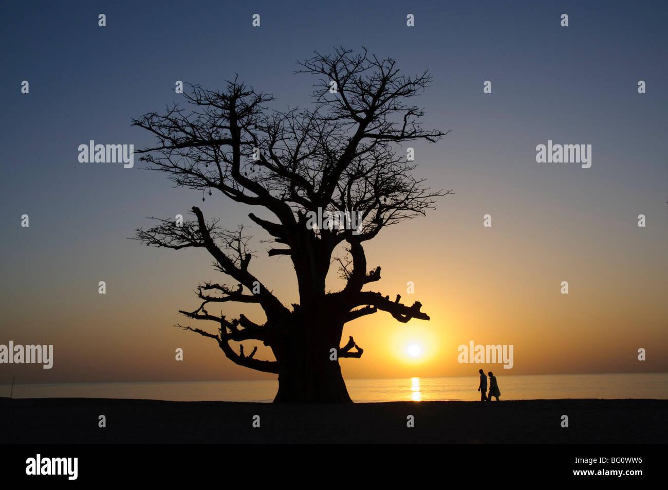 Baobab et couple walking, Delta du Sine Saloum, au Sénégal, en Afrique de l'Ouest, l'Afrique Photo Stock