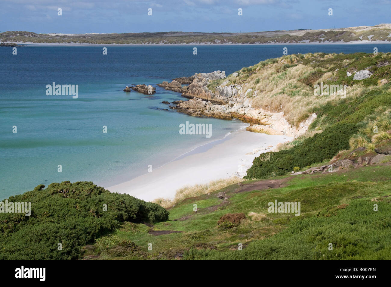 Gypsy Cove, Yorke Bay, Port Stanley, îles Malouines, l'Amérique du Sud Photo Stock