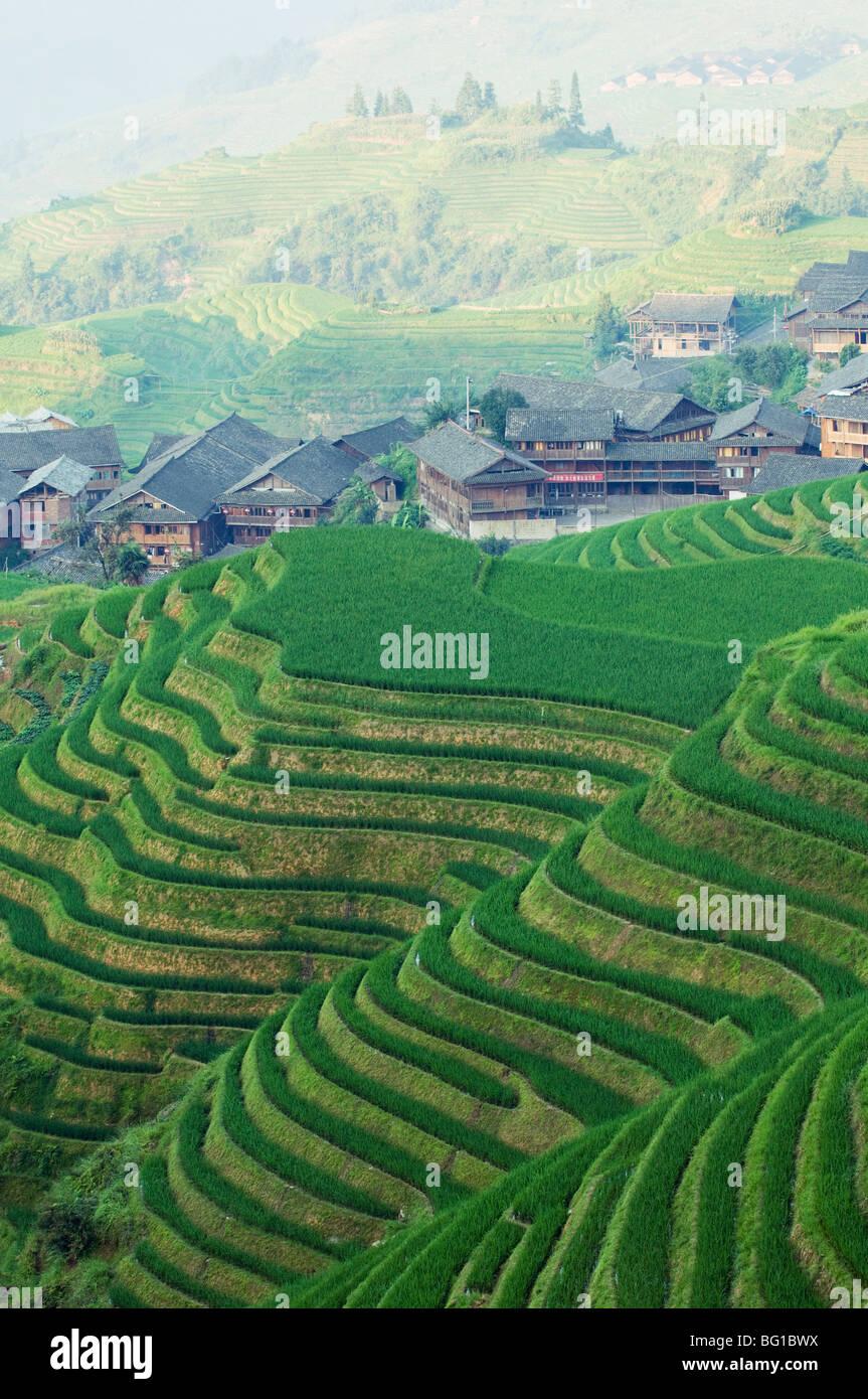 Les terrasses de riz de Backbone Dragons, Longsheng, Guangxi Province, China, Asia Photo Stock