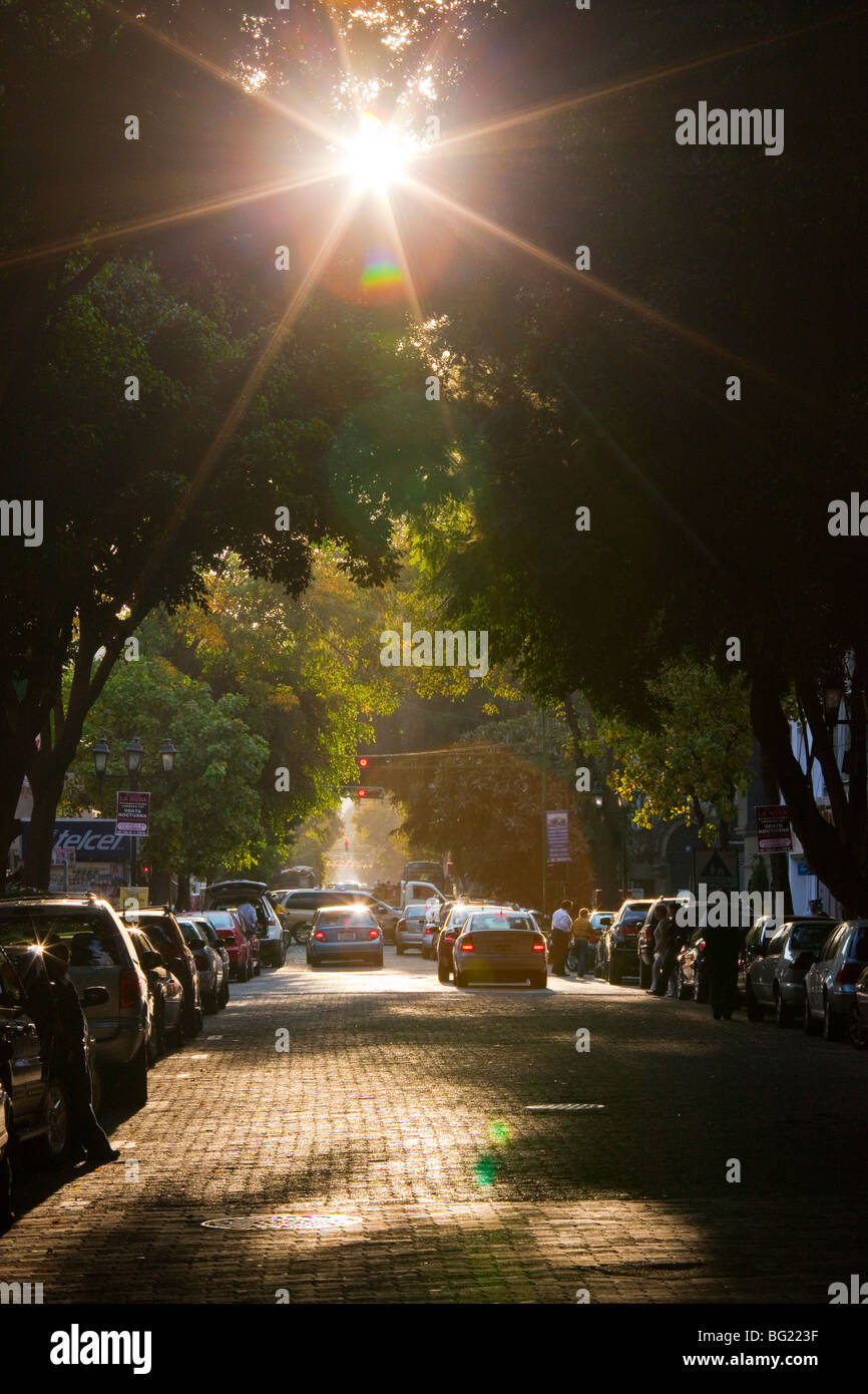 Rue bordée d'arbres, dans la Zona Rosa à Mexico Photo Stock