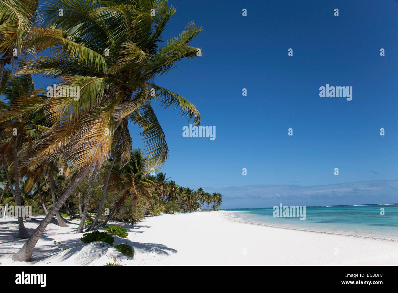Punta Cana, République dominicaine, Antilles, Caraïbes, Amérique Centrale Photo Stock