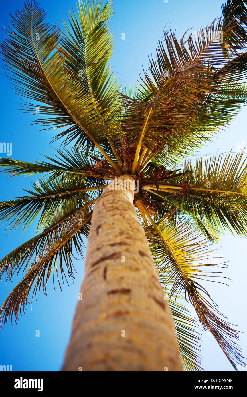 Palmiers et ciel des Caraïbes Photo Stock