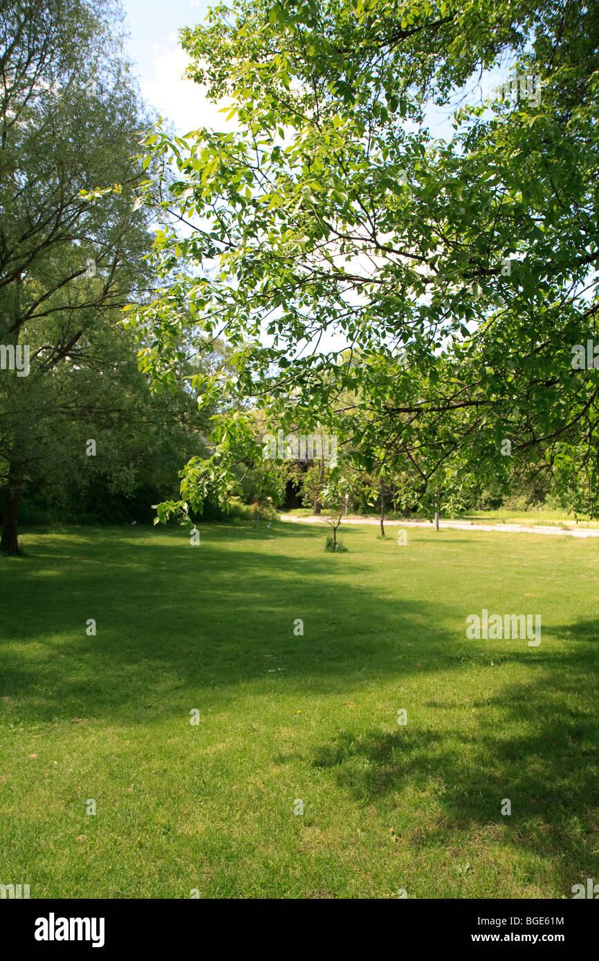 L'herbe du parc journée ensoleillée Photo Stock