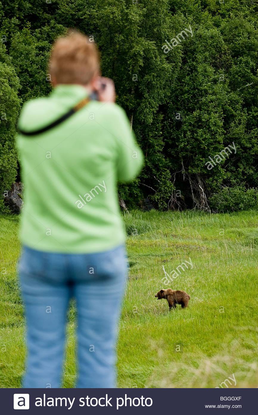 Alaska, Turnagain Arm. Tourist photographing un jeune grizzli par la Seward Highway près d'Anchorage. La Photo Stock