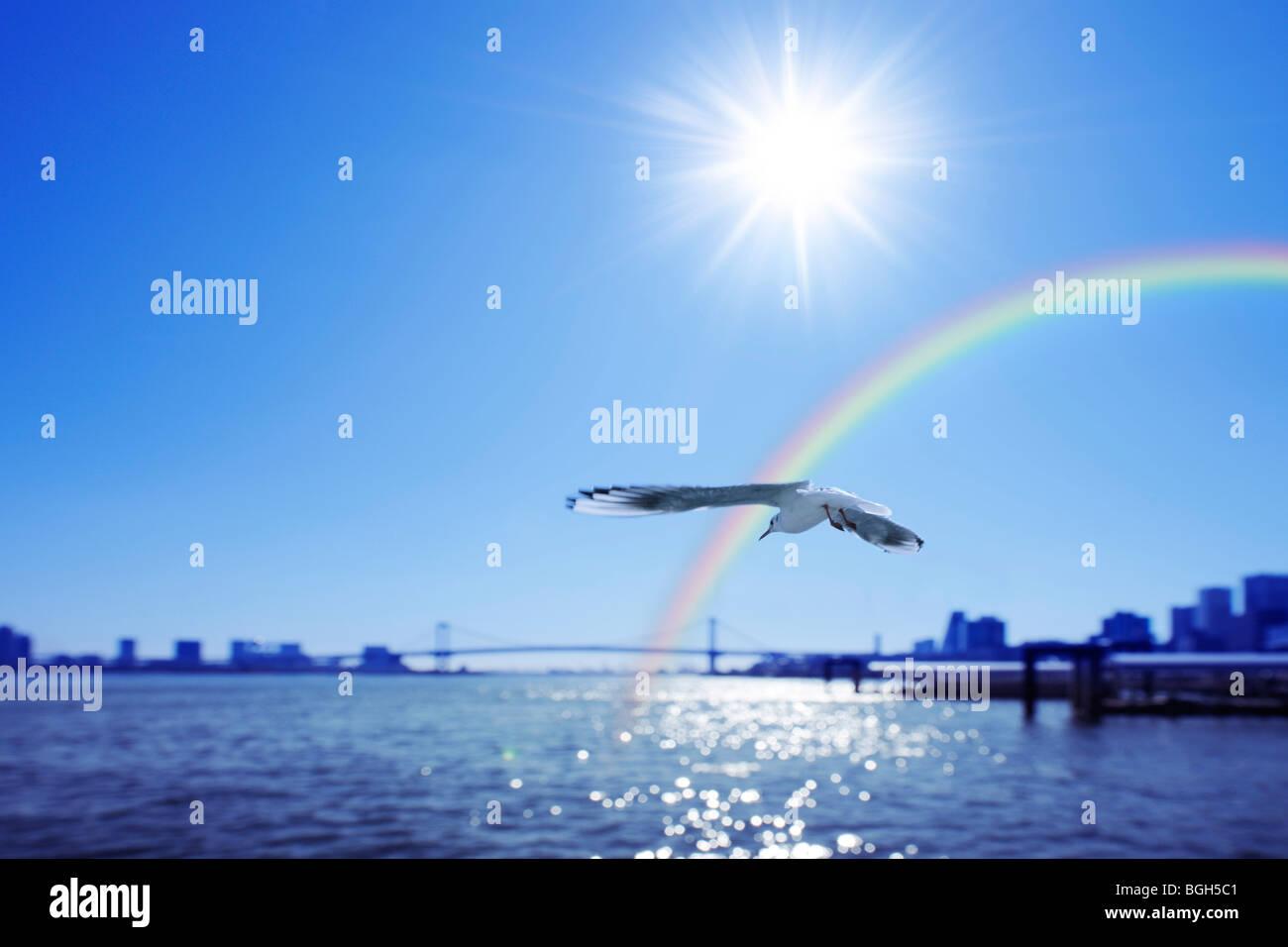 Seagull flying autour de port et un arc-en-ciel, Chuo-ku, Tokyo, Japon Banque D'Images