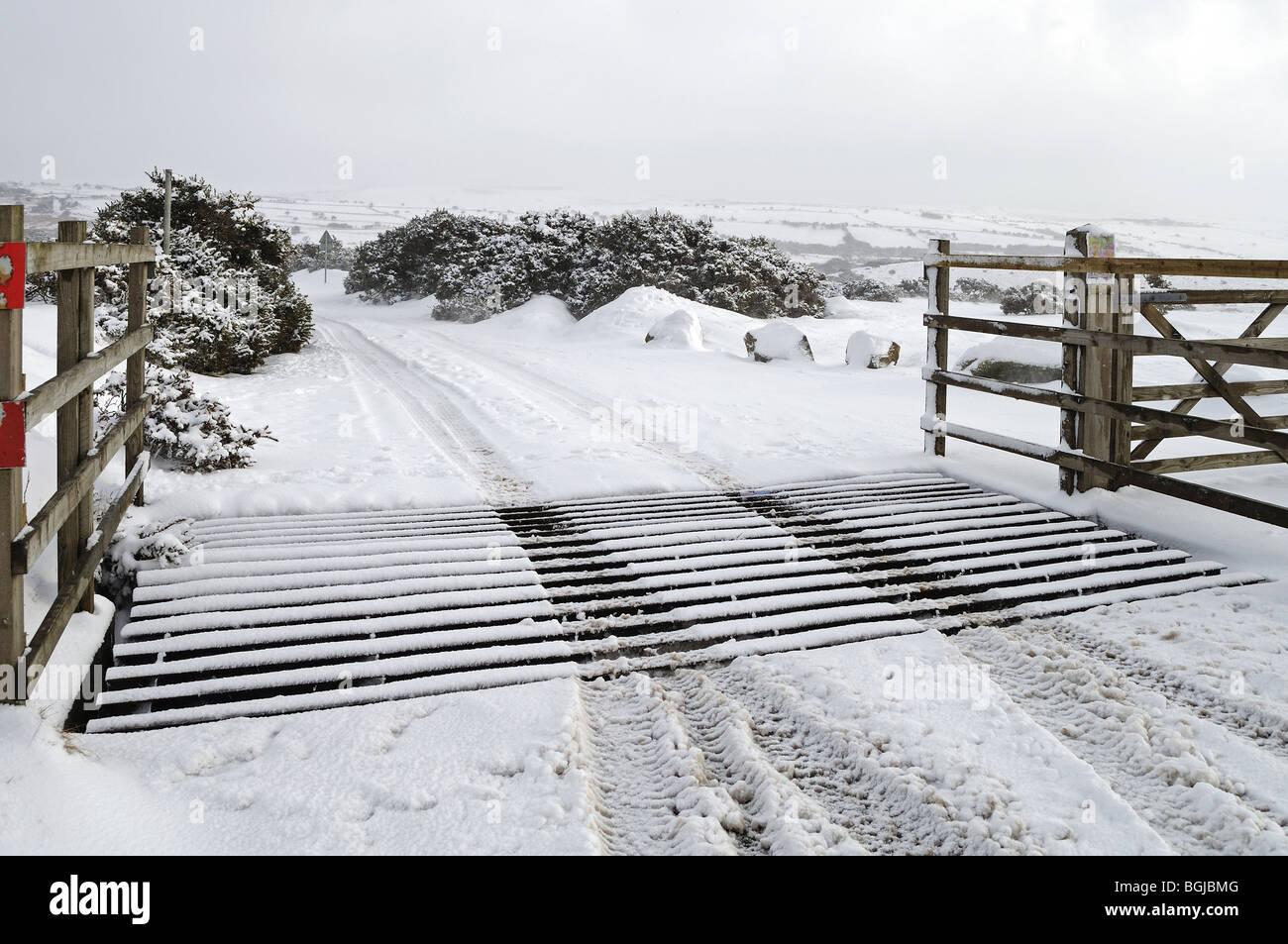 La neige a couvert une grille de bovins sur Bodmin Moor, Cornwall, uk Photo Stock