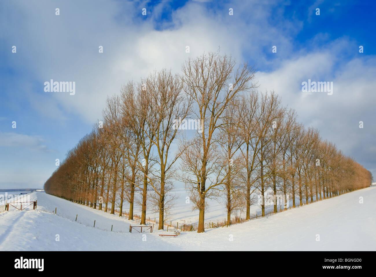 La composition avec arbres de la Johannes Kerkhovenpolder près de Woldendorp, province de Groningue, Pays-Bas Banque D'Images