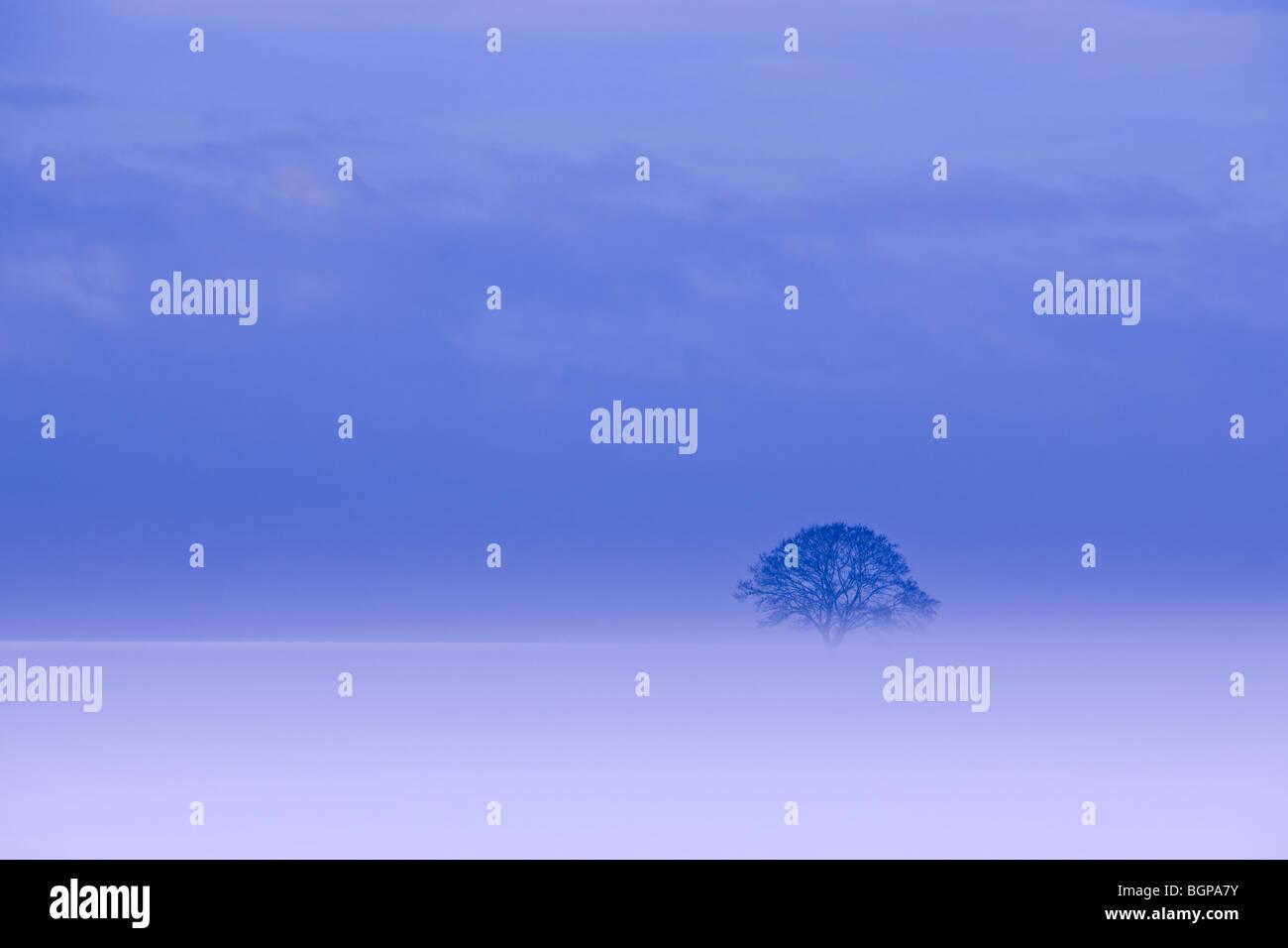 Lonesome hiver arbre en Hollande dans le Kroonpolder près de Drieborg, province de Groningue, Pays-Bas Photo Stock