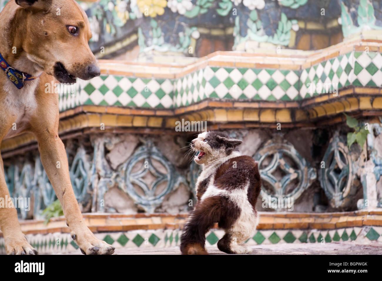 Chat et chien lutte Photo Stock