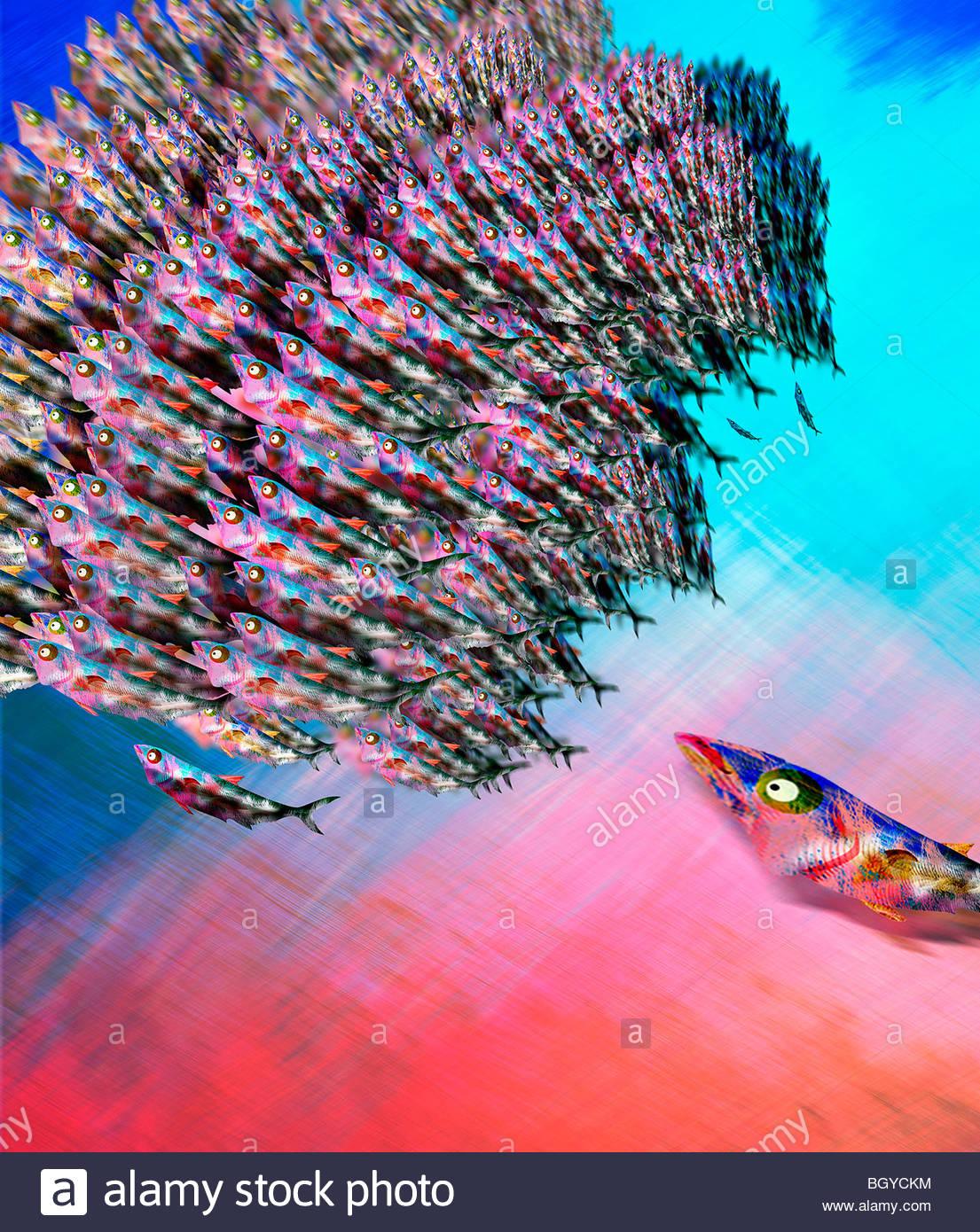 L'École de poissons prédateurs chassant Banque D'Images