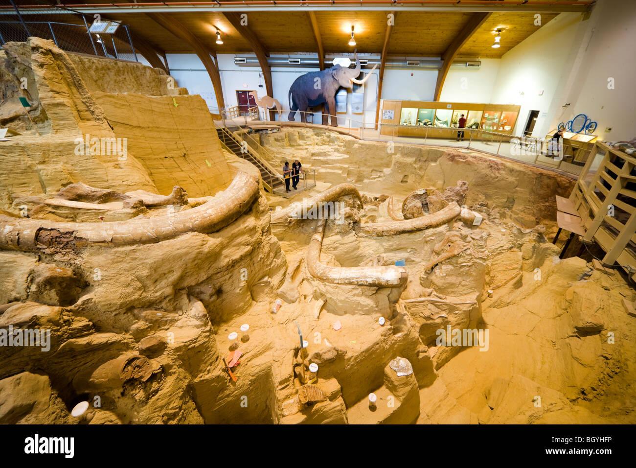 Le Mammouth Musée de site, Hot Springs et. Les visiteurs qui cherchent dans le bonebed avec os de mammouth Photo Stock