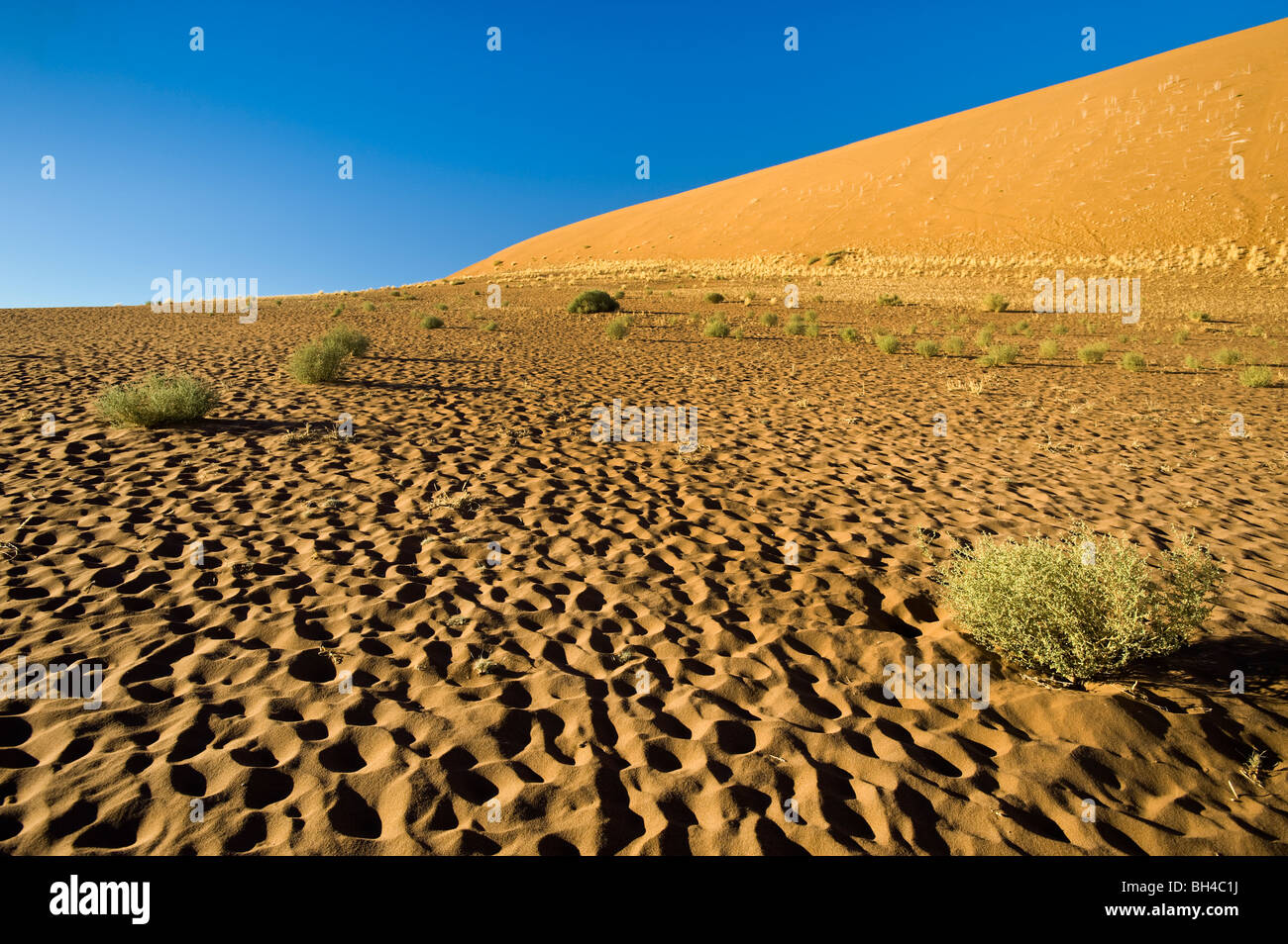 La Namibie namib desert deadvlei SOSSUSVLEI dunes sand early morning light ambiance ambiance ambiance dunes de sable Photo Stock