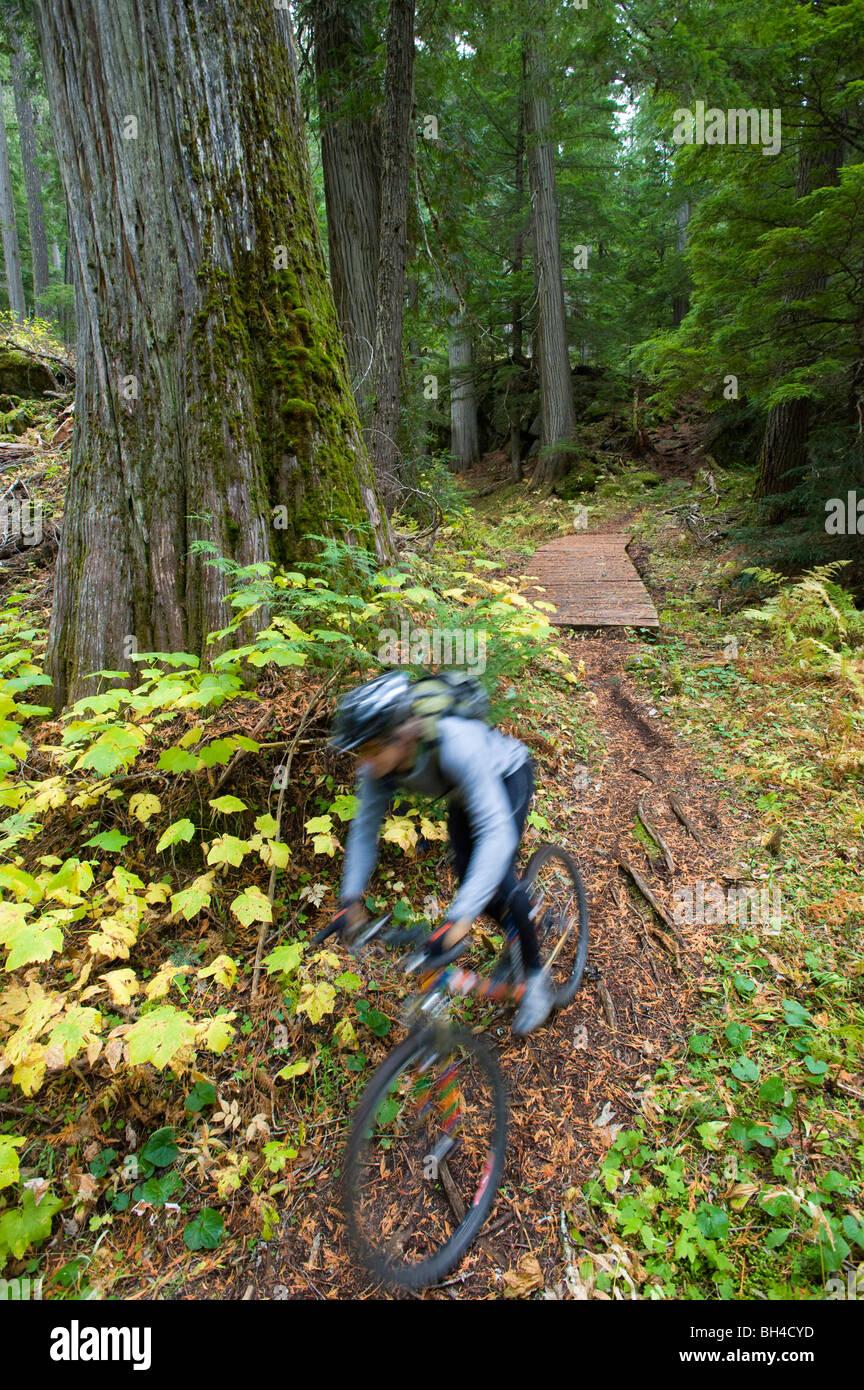 Un homme est un flou comme il mountain bikes la verdoyante forêt de du nord de l'Idaho. (Motion Blur) Banque D'Images