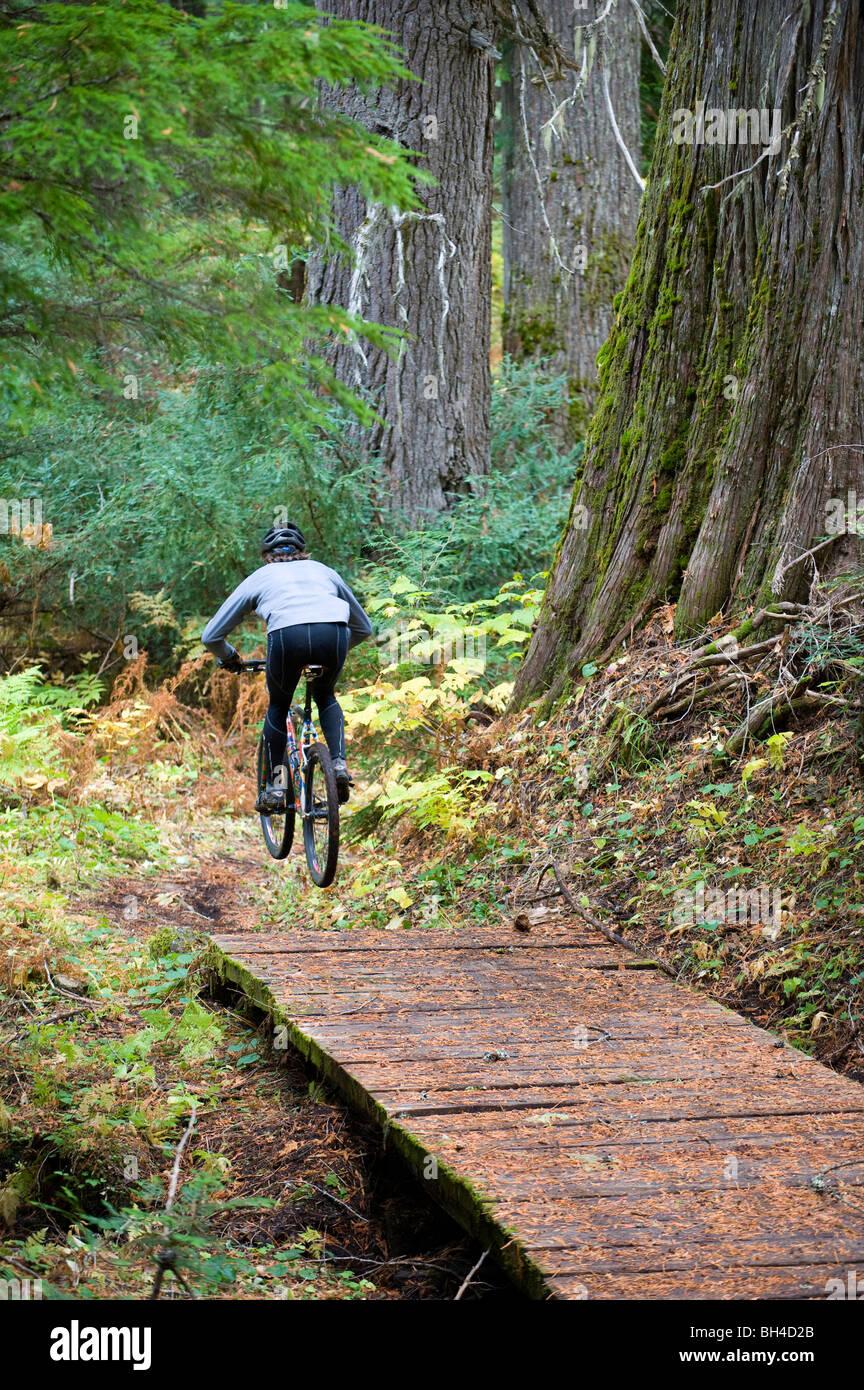 Un vélo de montagne s'envole un petit pont tout en montant un sentier à travers les arbres de cèdre géant dans le nord de l'Idaho. Banque D'Images