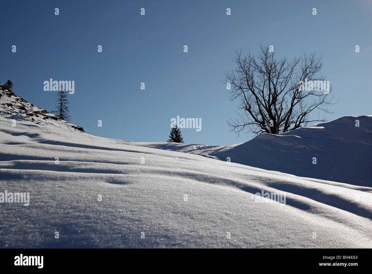 Paysage d'hiver enneigé au Hochalm dans les Alpes bavaroises Bavaria Allemagne Europe Banque D'Images