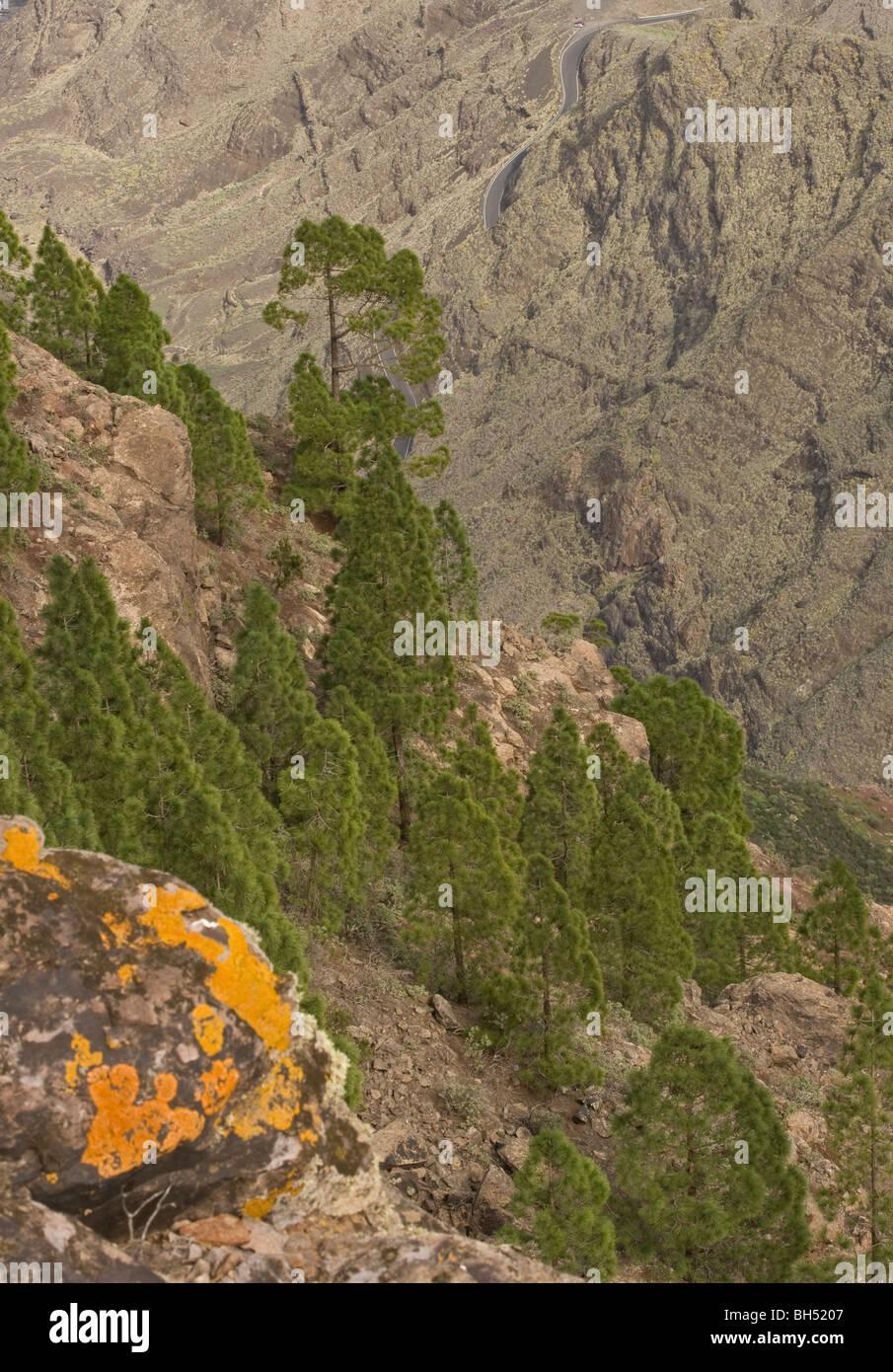 Paysage volcanique de couleur sous Roque Faneque. Banque D'Images