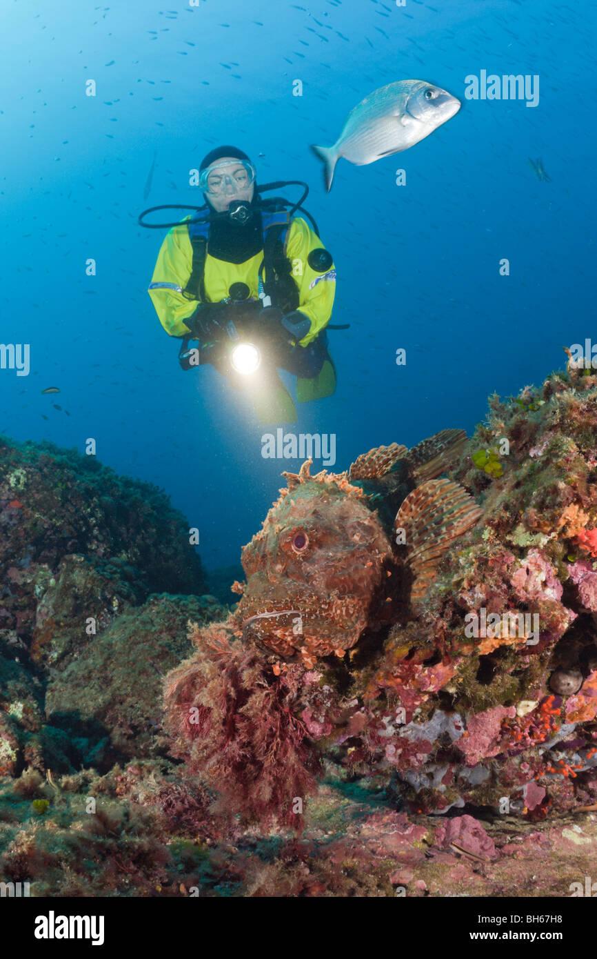 Scuba Diver et Grand sébaste, Scorpaena scrofa, Les Ferranelles, Îles Medes, Costa Brava, Espagne, Mer Photo Stock