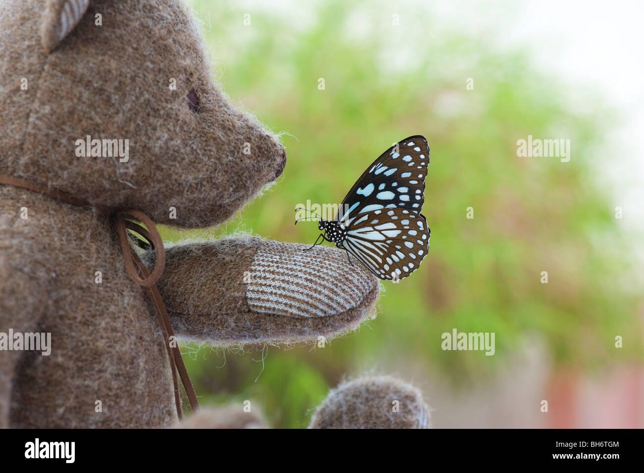 Ours en peluche tenant un papillon tigre bleu Photo Stock