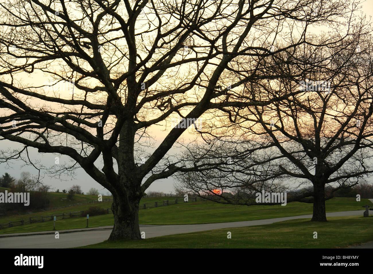 AJD64418, Blue Ridge Parkway, NC, Caroline du Nord, donnent sur, coucher de soleil, silhouette d'arbres Banque D'Images