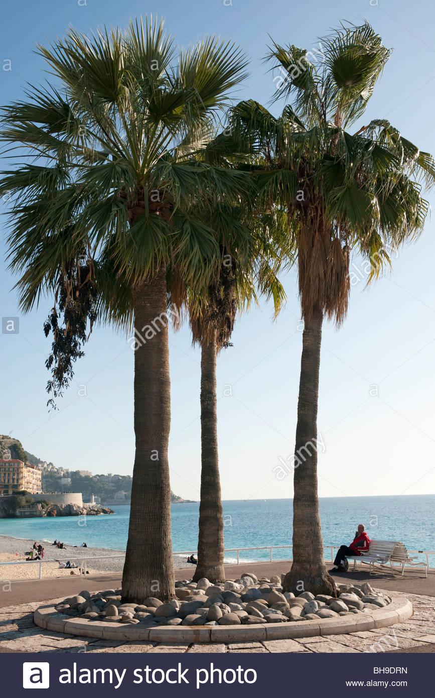 Tour de lit, de palmiers, de pavage, de Promenade des Anglais, la ...