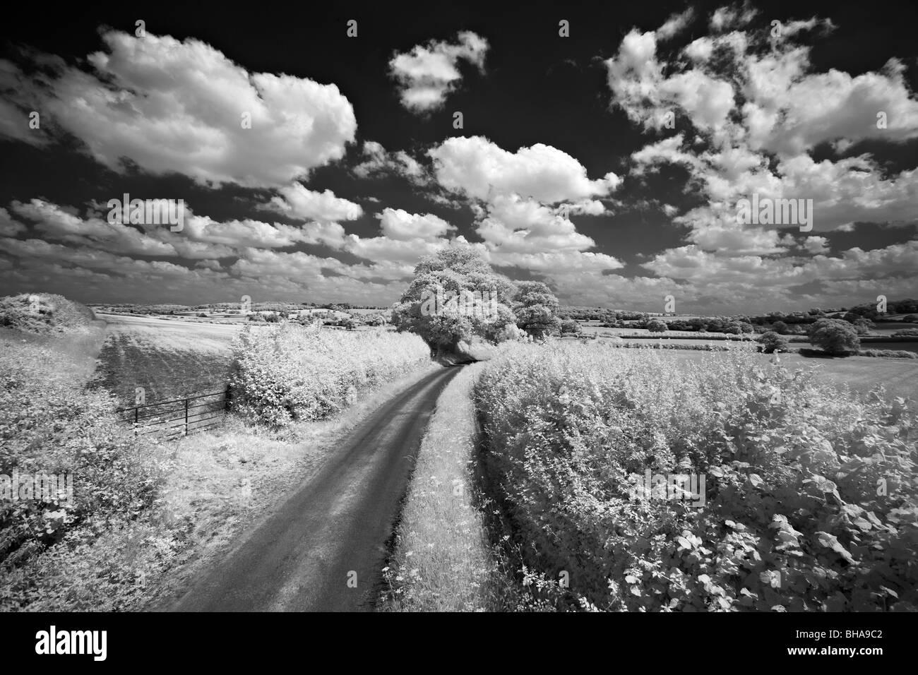 Un chemin de campagne, nr de cerne le haut, Dorset, England, UK Photo Stock