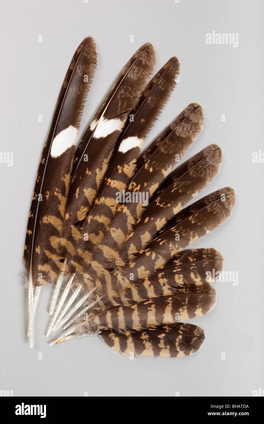 Stylos d'oiseaux séparément sur un fond gris. Photo Stock