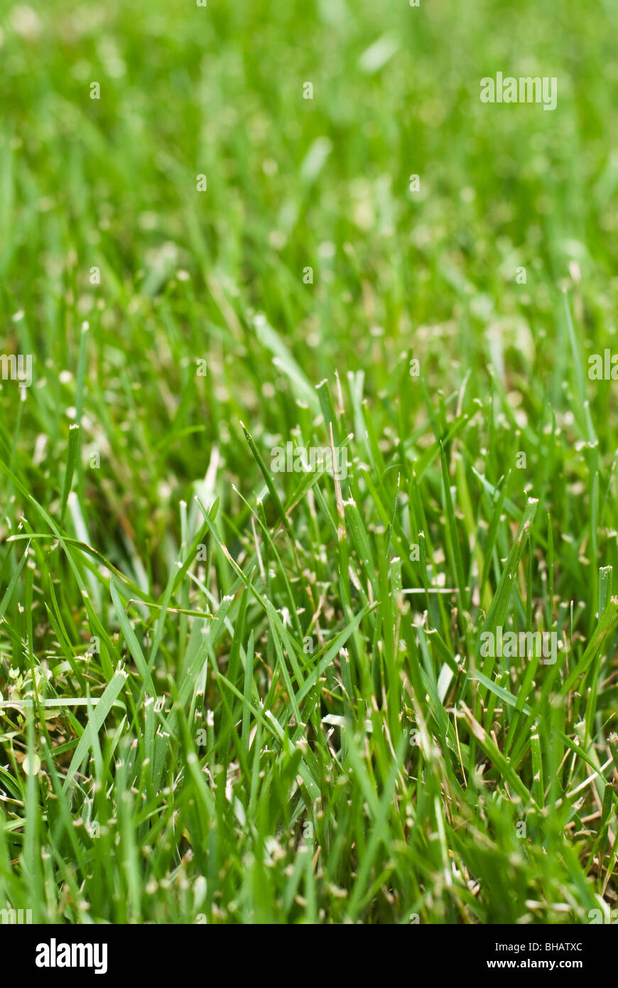 Close-up of Grass Photo Stock