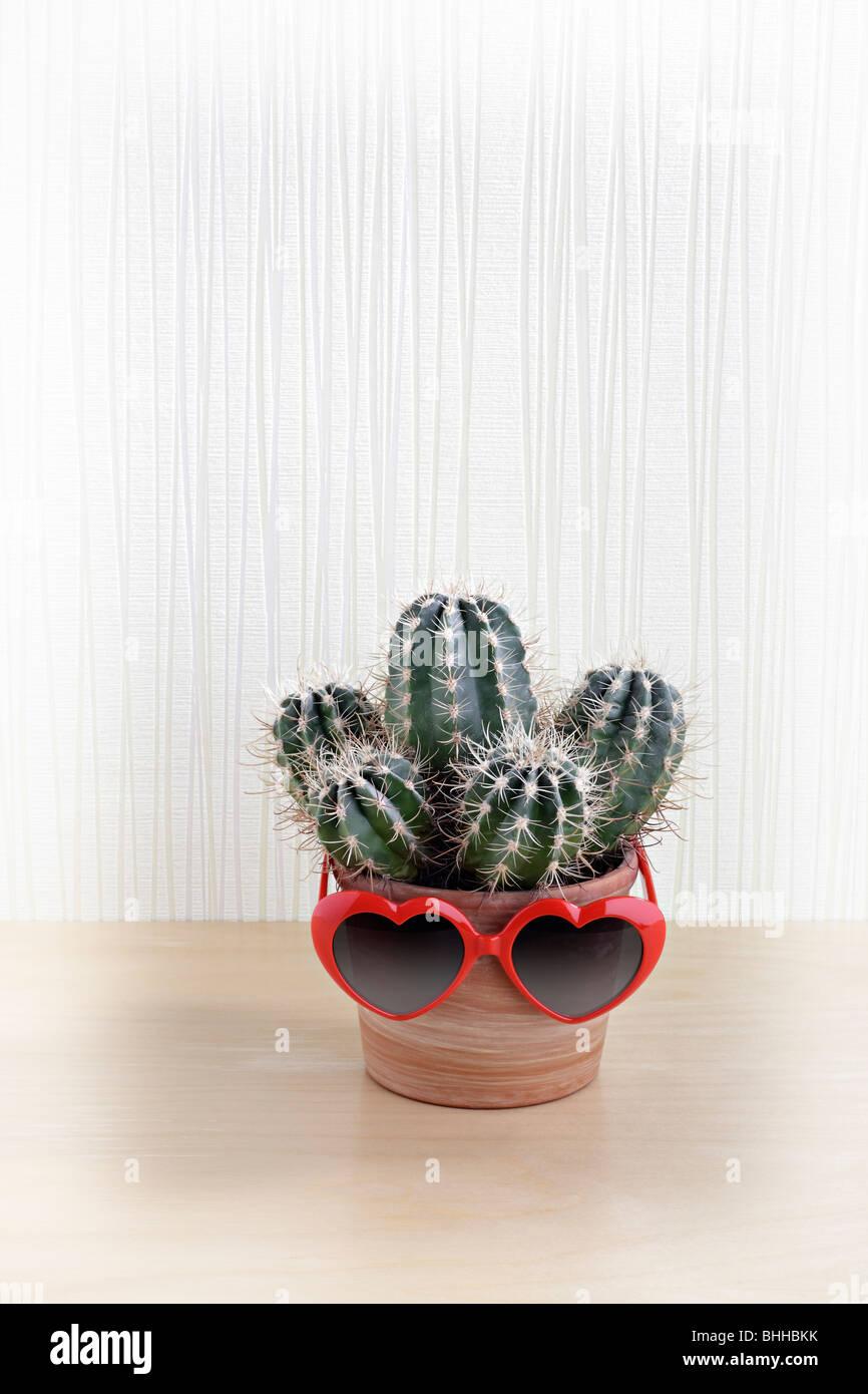 Kaktus mit Sonnenbrille herzfoermiger Photo Stock
