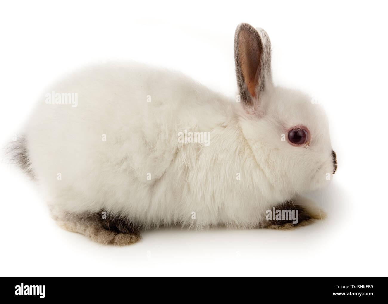 Joli lapin blanc. C'est découper sur un fond blanc. Photo Stock