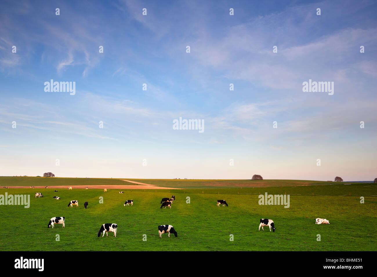 Près de terres agricoles Avesbury cercle de pierres anciennes Photo Stock