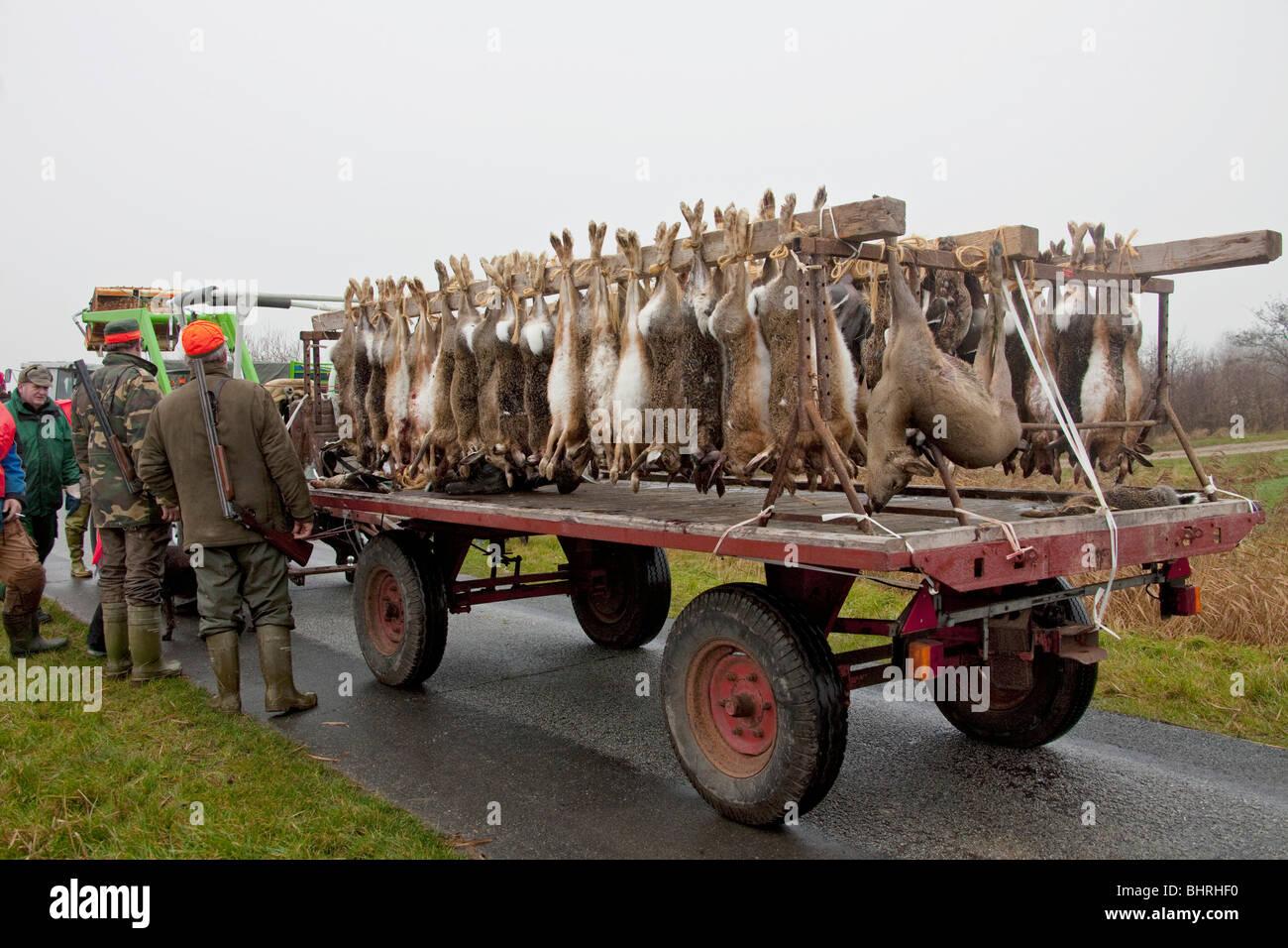 Lapin, lièvre et chevreuil. Les animaux tués sur un panier après une chasse Banque D'Images