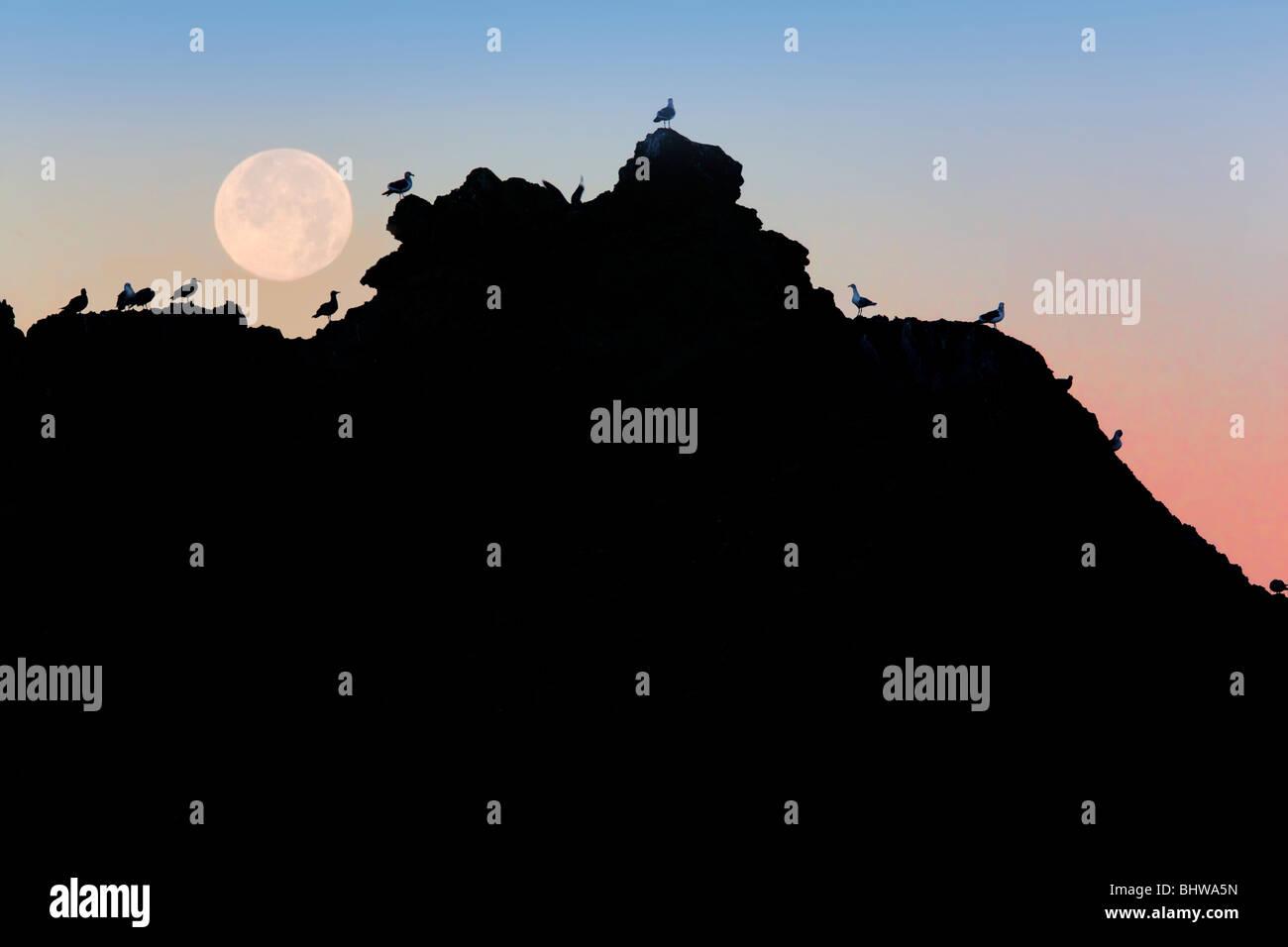 Pleine lune se couche sur rock à Bandon Beach avec des mouettes. Bandon, Oregon Photo Stock
