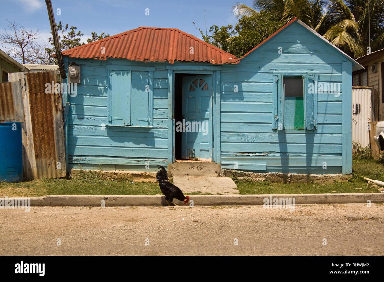 Vieille maison rustique de couleur bleu ciel avec coq, St John's, Antigua Banque D'Images