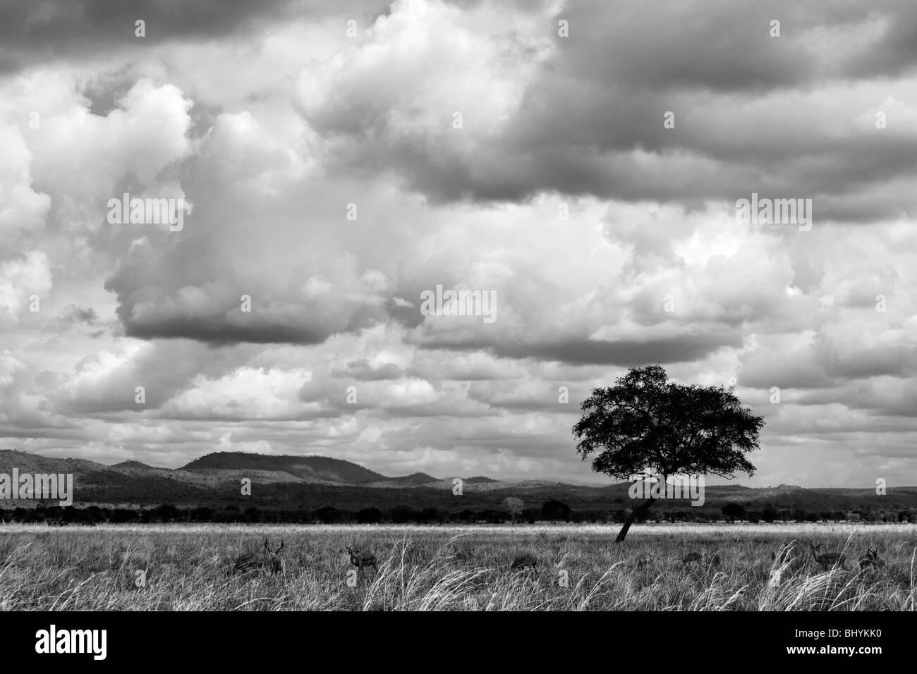 NP Mikumi, Tanzanie, Afrique de l'Est Photo Stock