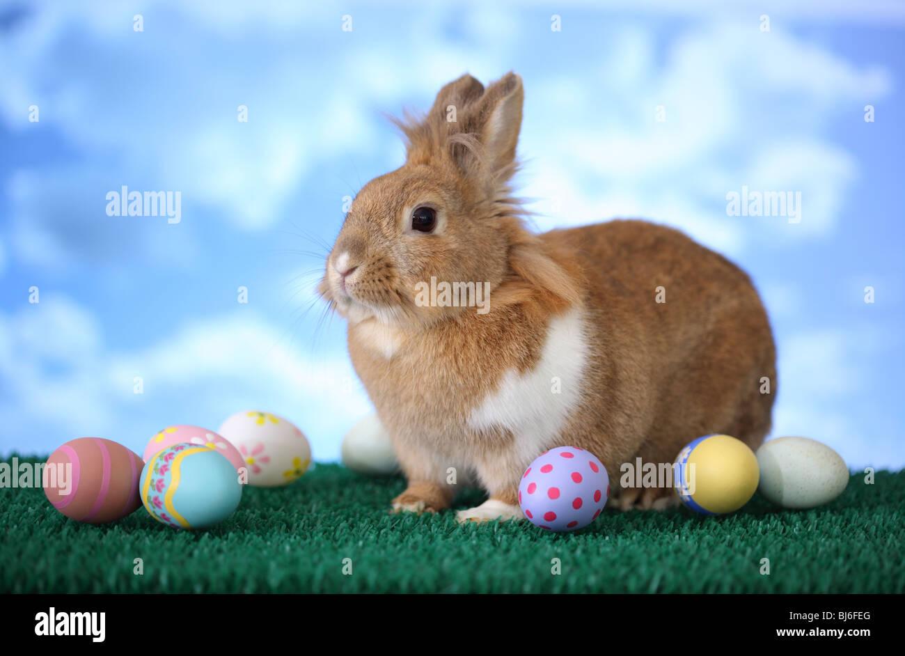 Lapin de Pâques et les oeufs Photo Stock